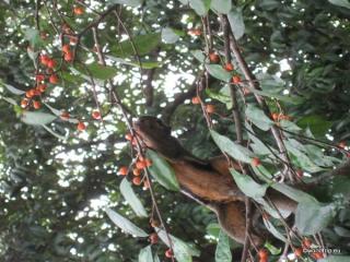 Eichhörnchen von unten